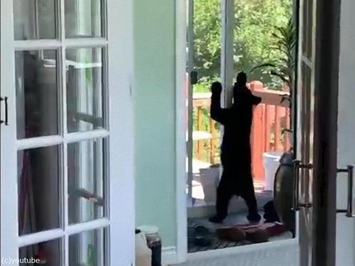 子クマ3匹が家の中に入り込んだ02