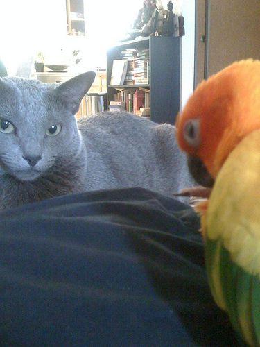 インコと猫16