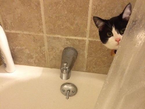プライバシーを侵略してくる猫たち00