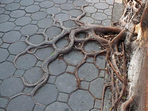 木の生命力10