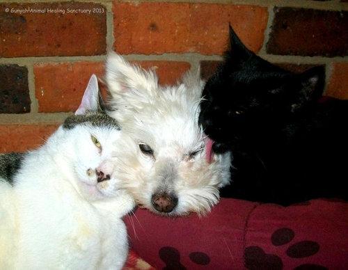 誰にも心を開かなかった犬が、猫と親友に05