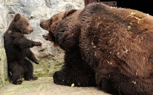 クマの親子01