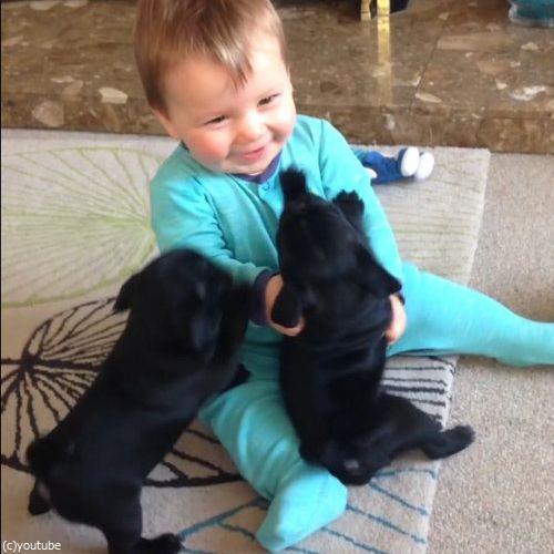 赤ちゃんとパグ02