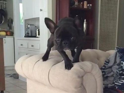 犬のジャンプ失敗01