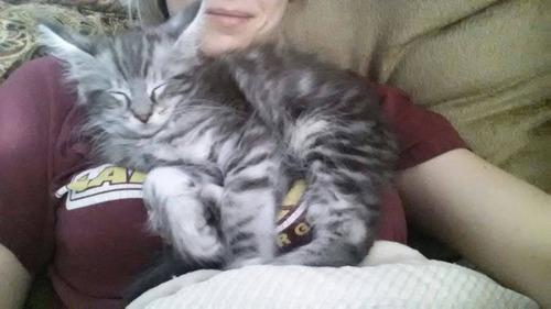 猫のしっぽが世界記録に01
