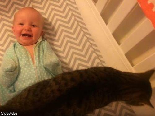 猫が大好きな赤ちゃん07