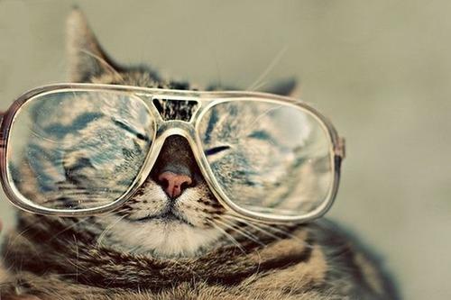 メガネ猫10