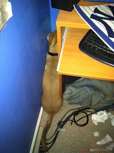 隠れるのが下手な犬たち18