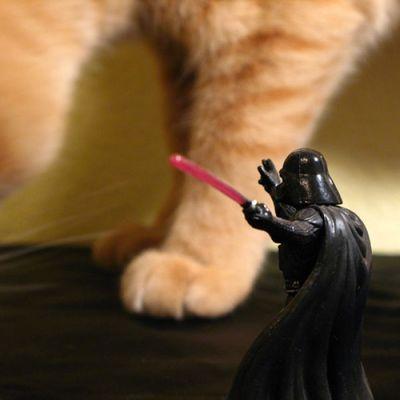 猫スターウォーズ08