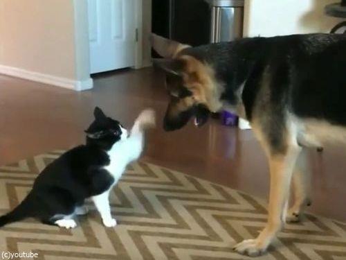 猫と犬がケンカしてると思ったら…結末にほっこり02