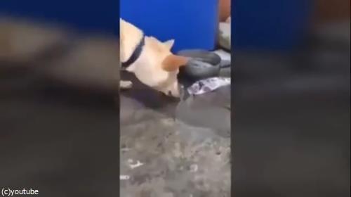 魚を助ける犬05