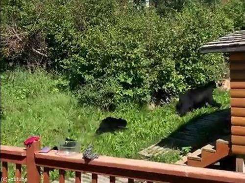 子クマ3匹が家の中に入り込んだ00