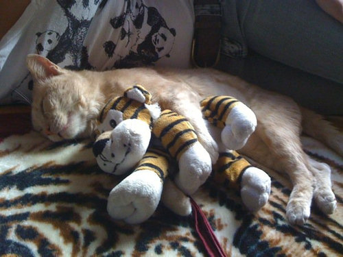 手をつないで寝る子猫たち03