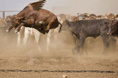 牛のジャンプ力を20