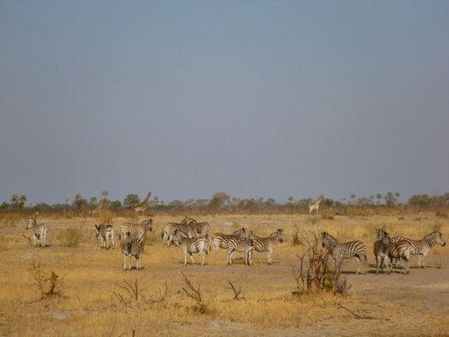 アフリカ縦断の旅19