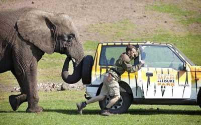 エンストした車をゾウさんがヘルプ01