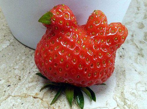 11変わった形の野菜・果物