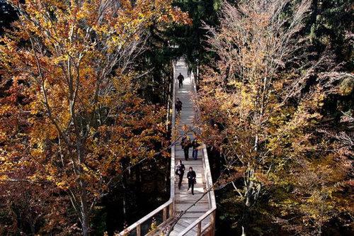 「Tree Top Walk」11