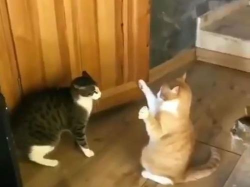 謎のパワーを発揮する猫00