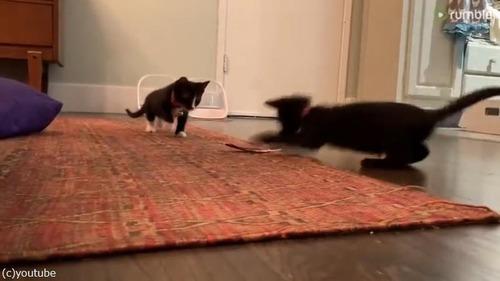 羽VS子猫ちゃんズ02