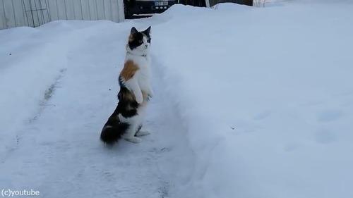 雪景色を見たうちの猫は03