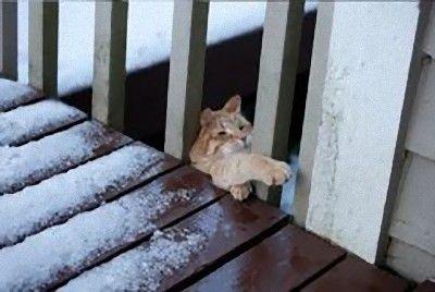 猫の受難05