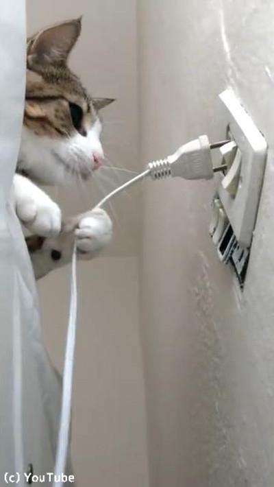 プラグを挿したい飼い主VSプラグを抜きたい猫02