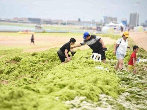 中国の緑の海00