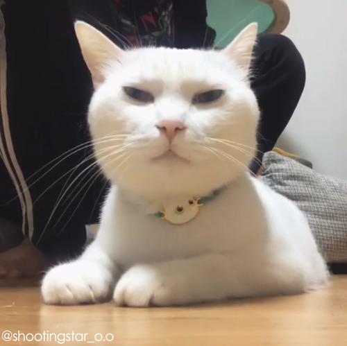 うちの猫のブラッシング01