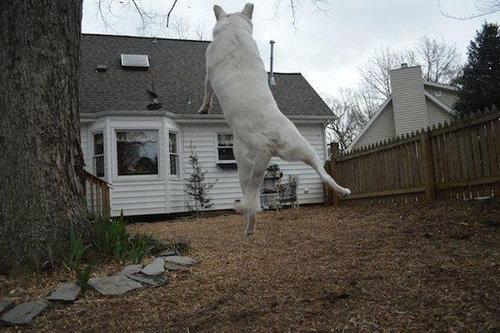 犬を巨大化する写真テクニック14