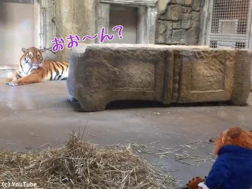 ぬいぐるみと虎00