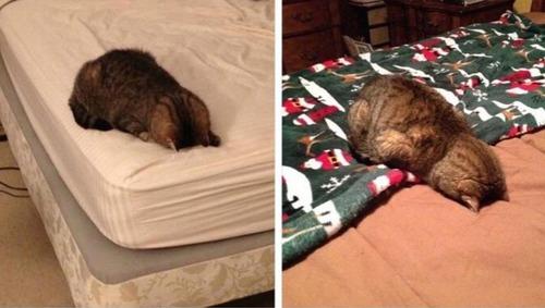 猫の11月と12月の違い01
