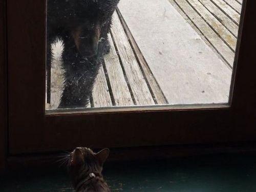クマを追い払う猫01