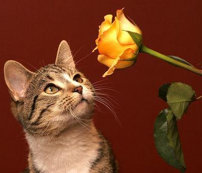バラの似合うペット02