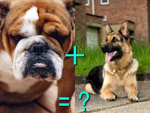 犬の混血A 14