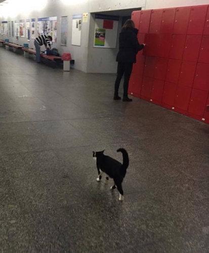 ドイツの大学で暮らす猫08
