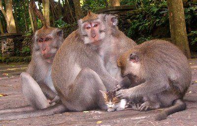 猿と猫の仲04