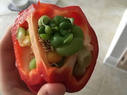 発芽した野菜や果物09