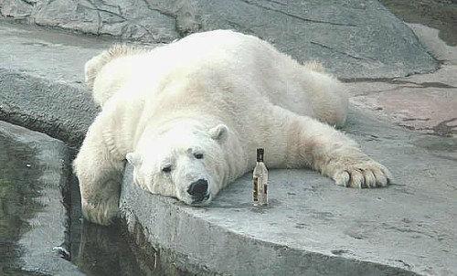 楽しい白クマ14