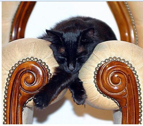 眠る猫20