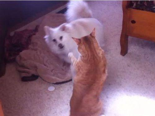 犬と猫のモフモフ対決01