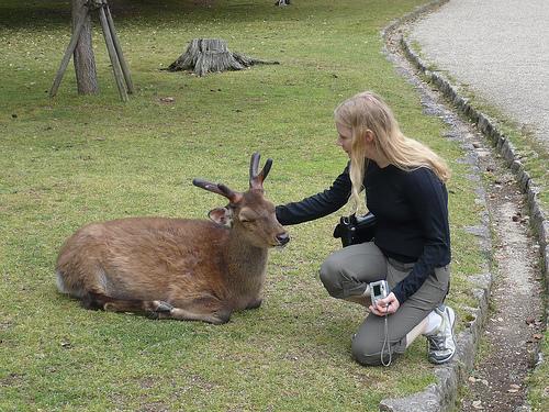 奈良の鹿と外国人00