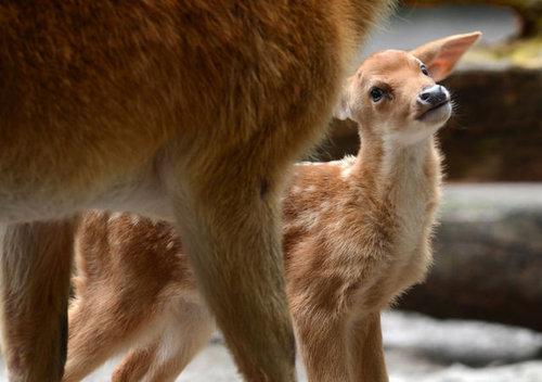 動物の赤ちゃん08