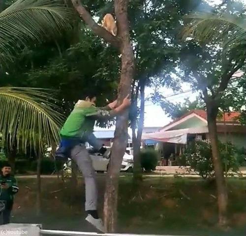 木から降りられない猫01