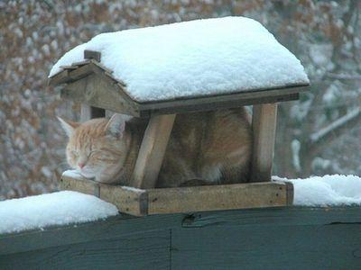 寒がり猫02
