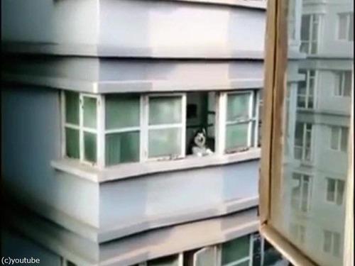 向かいの犬を呼ぶ方法03