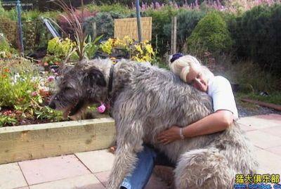 巨大な犬08