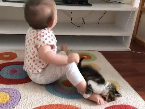 子猫が赤ちゃんに挑む01