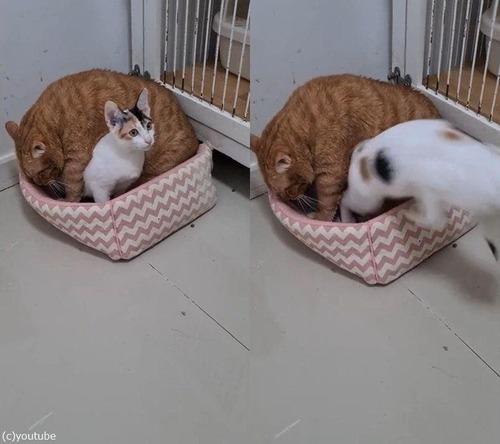 ベッドと大きな猫02