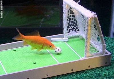 サッカーをする金色の生物01